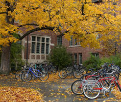 Picture of Bikes Underneath a Tree in Fall, University of New England