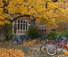 Imagen de bicicletas abajo de un árbol en otoño, University of New England