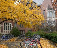 Imagen de bicicletas abajo de un árbol en otoño con edificios, University of New England