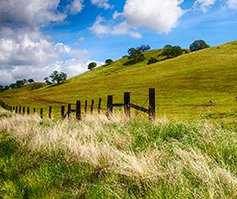 Picture of a Grassy Slope with Fence