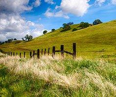 Imagen de una colina con césped y cerca