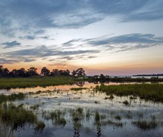 Picture of water/everglades at dusk