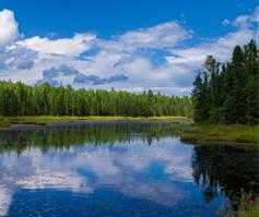 Imagen de un río con árboles verdes del bosque junto a la orilla