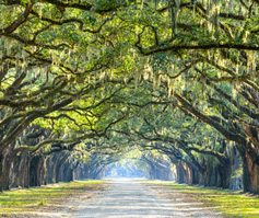 Picture of tree tunnel in Myrtle Beach, SC